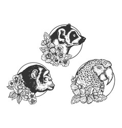 parrot lemur monkey ape head animal sketch vector image