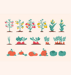 vegetables agricultural plants set isolated vector image