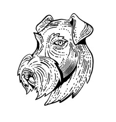 Airedale terrier head etching black and white vector