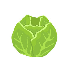 Green cabbage head cartoon isolated icon vector