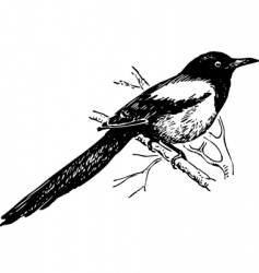 Bird magpie vector