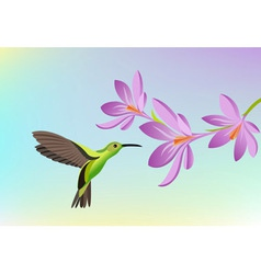 Greeting card with humming-bird vector