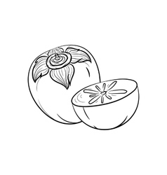 Hand drawn persimmon sketches vector
