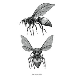 Wasp hand draw vintage clip art isolated on white vector