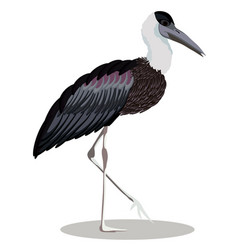 Woolly-necked stork cartoon bird vector