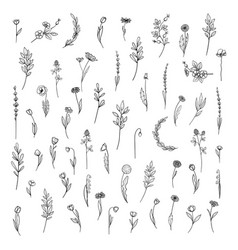 botanical collection with flowers and leaves vector image