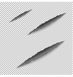 Claws scratches on paper vector