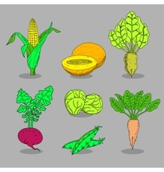 Hand-drawn collection of icons vegetables vector