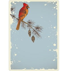 Pine branch and cardinal bird vector image