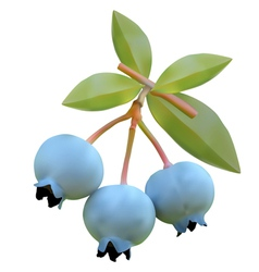 Blueberry on branches vector image vector image