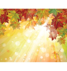 fall vector image vector image