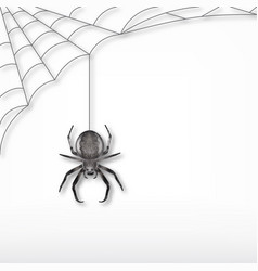 black spider and web vector image