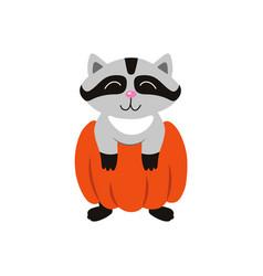 flat funny cute raccoon wearing big pumpkin vector image