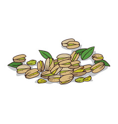 Isolated clipart pistachio vector