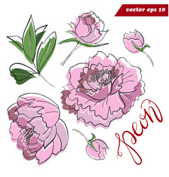 peony flower elements set with leaves and hand vector image