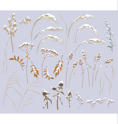 snow covered wild herbs and cereals set vector image