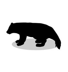 wolverine bear wildlife black silhouette animal vector image