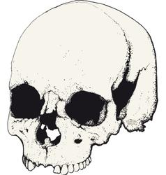 skull in profile vector image vector image