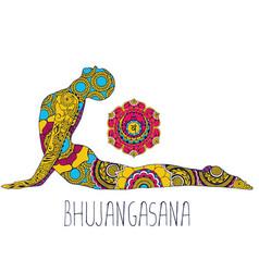 Bhujangasana or cobra pose vector