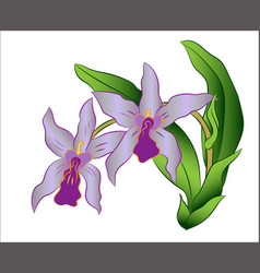 branch of orchid flower with green leaves vector image