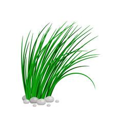 Bush tall green grass vector