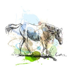 Colored hand sketch of a white horse vector