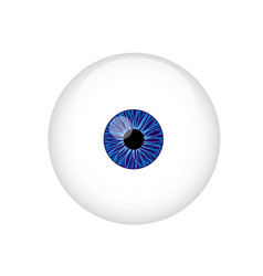 Human eyeball vector