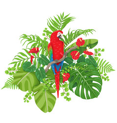 Red macaw and tropical plants vector