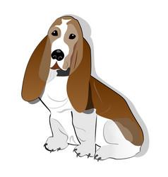 basset hound isolated drawing on white background vector image