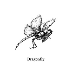 dragonfly hand drawn sketch vector image