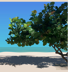 Landscape with tropical tree on sandy beach vector