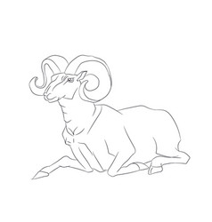 mountain ram lying line vector image