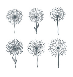 Tender dandelions on thin stems monochrome vector