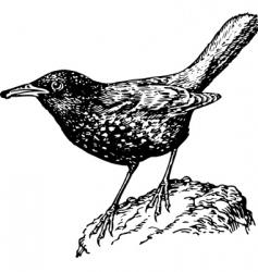 bird myophonus caeruleus vector image vector image