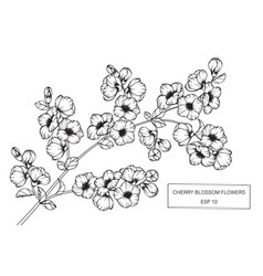 Cherry blossom flower drawing vector