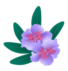 Purple Rhododendron with Green Leaves on White vector