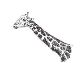 Sketch of giraffe vector image