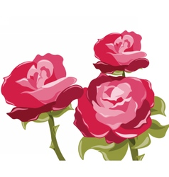 Abstract red rose background vector image