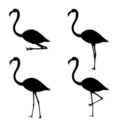 set of silhouettes of flamingo in different poses vector image