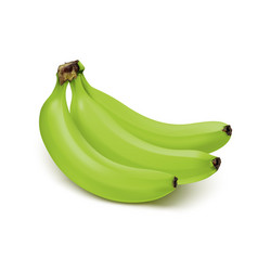 bunch of green bananas isolated on white vector image