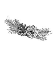 Hand drawn fir tree branch with cone isolated on vector