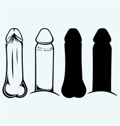 Anatomy of penis vector image vector image