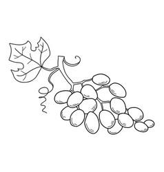 hand drawn sketch fruit - grape eco food vector image vector image
