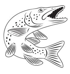 Pike fish vector