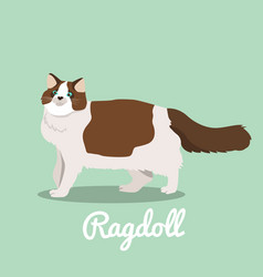 ragdoll cat looking something vector image