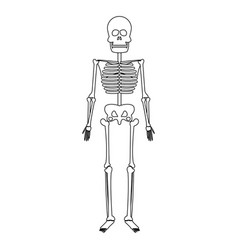 skeleton human bones skull medicine line vector image