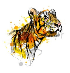 colored hand sketch a young tiger vector image