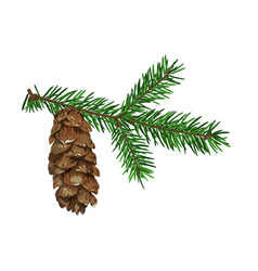 fir tree branch with cone isolated on white vector image