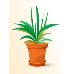 green Chlorophytum plant in a pot vector image