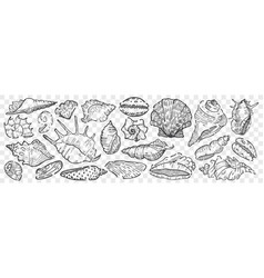 hand drawn seashells doodle set vector image